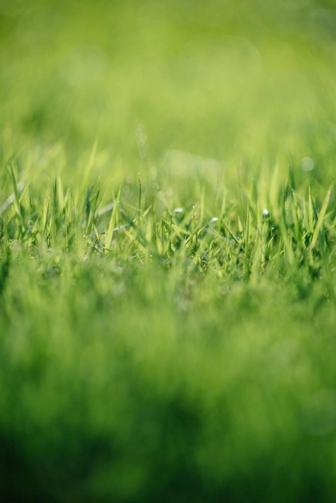 посадка газона своими руками